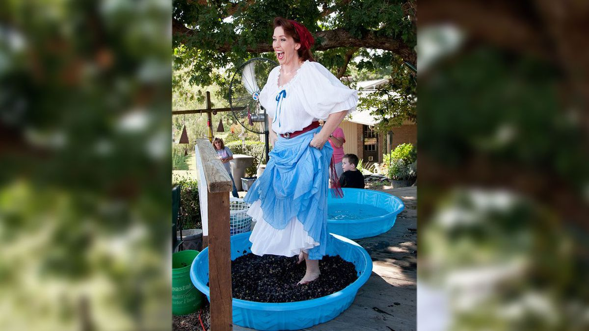 Have barrels of fun at Treehouse Vineyards' Grape Stompin' Festival