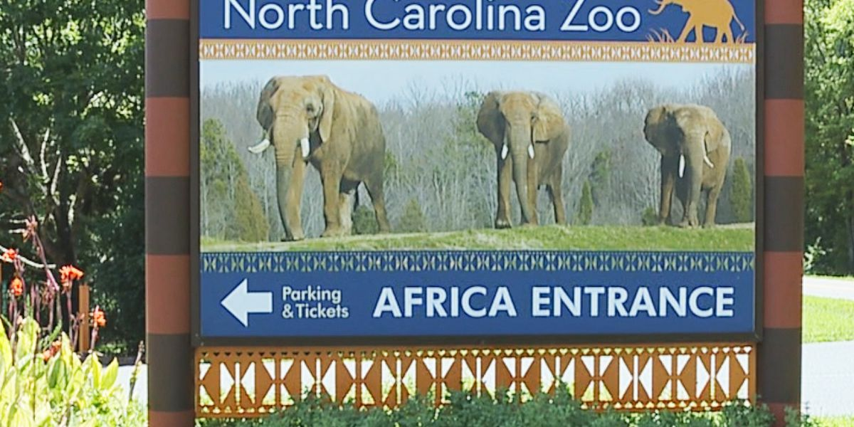 Worker at NC Zoo dies in fall from tree during workplace safety drill