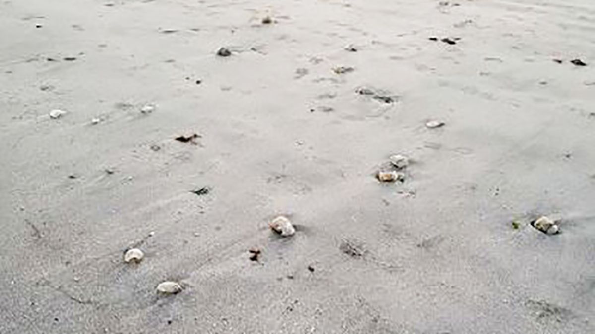 Hundreds of dead jellyfish, shrimp, crabs wash up on South Carolina beach