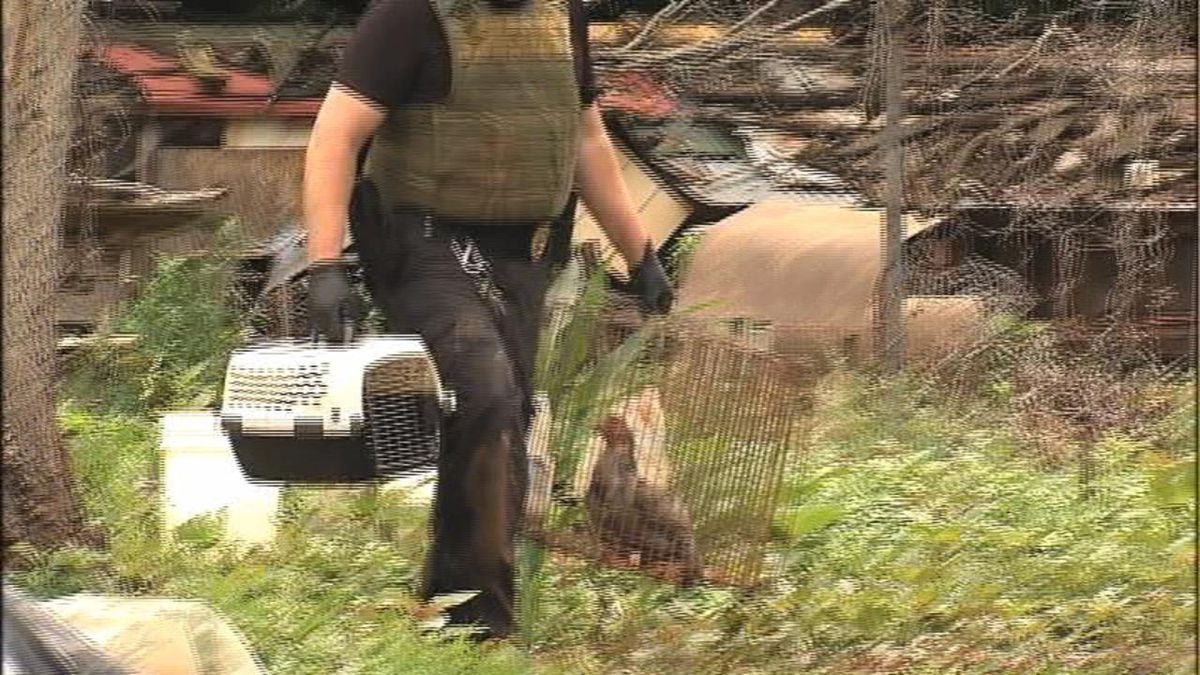 Deputies investigate after finding 358 live animals, 40 dead in Catawba County home