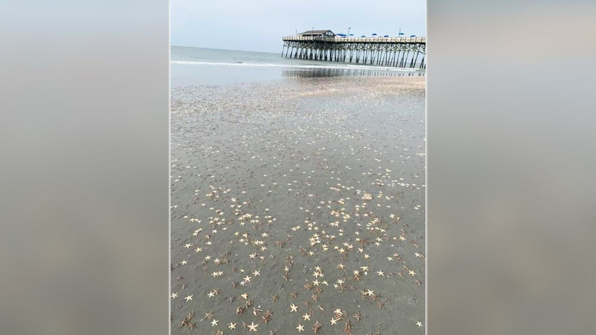 Thousands of starfish wash up along Myrtle Beach's Grand Strand
