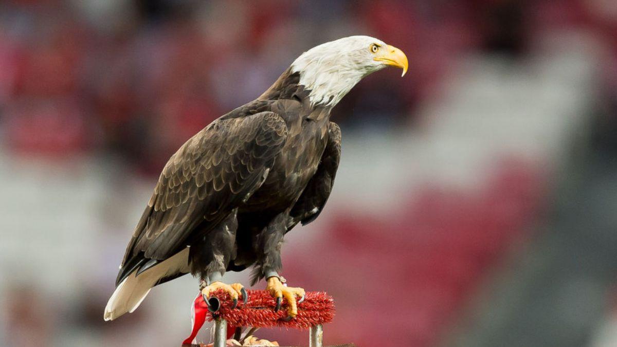 Nebraska conservation officers rescue bald eagle before blizzard