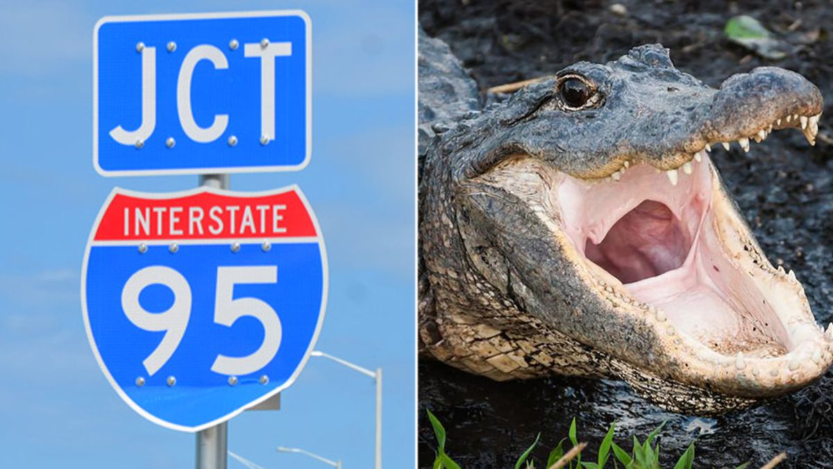 Mom, 2 kids killed in fiery wreck after car hits alligator on I-95 in SC