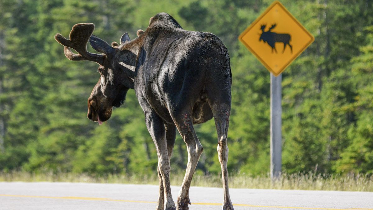 SPONSORED: Toyota of N Charlotte explains the Moose Test