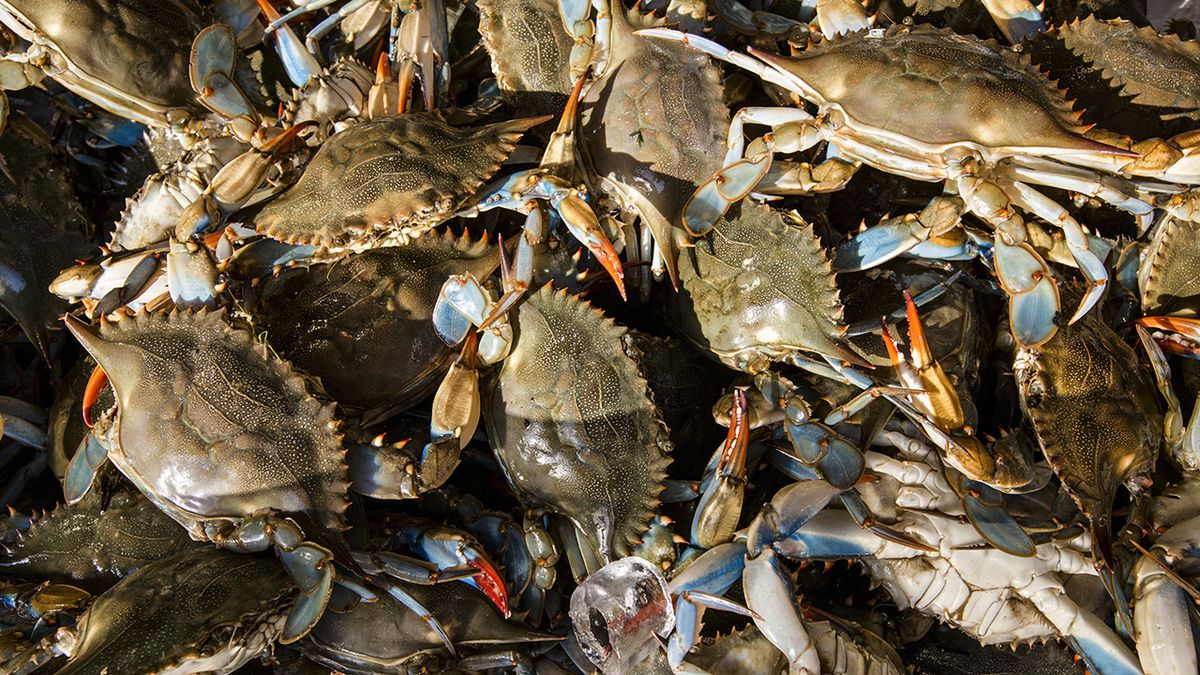 NC company owner pleads guilty to mislabeling foreign meat as Atlantic crab