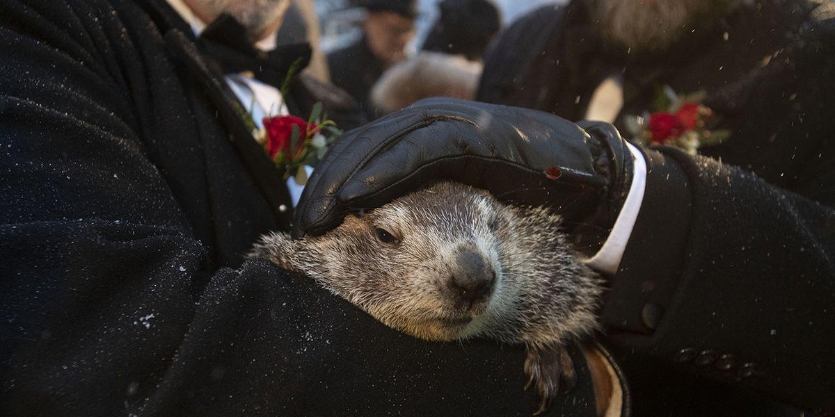 Groundhog Day 2020: Did Punxsutawney Phil see his shadow?