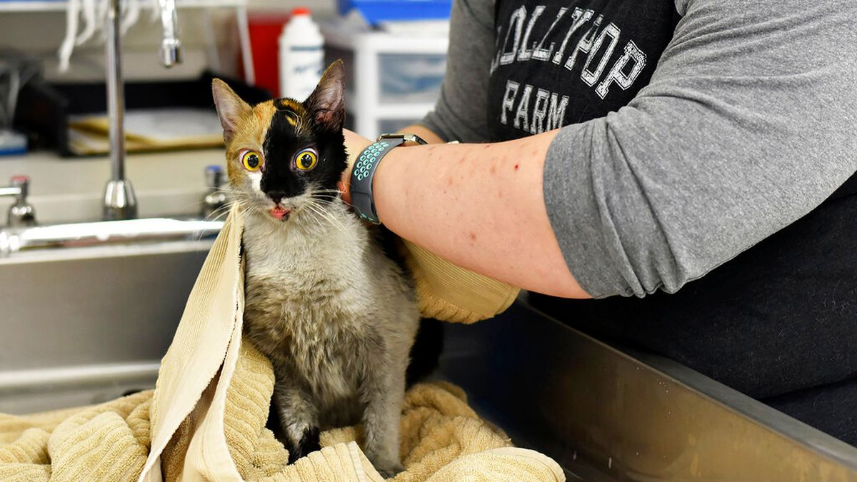 97 cats survive house fire in New York
