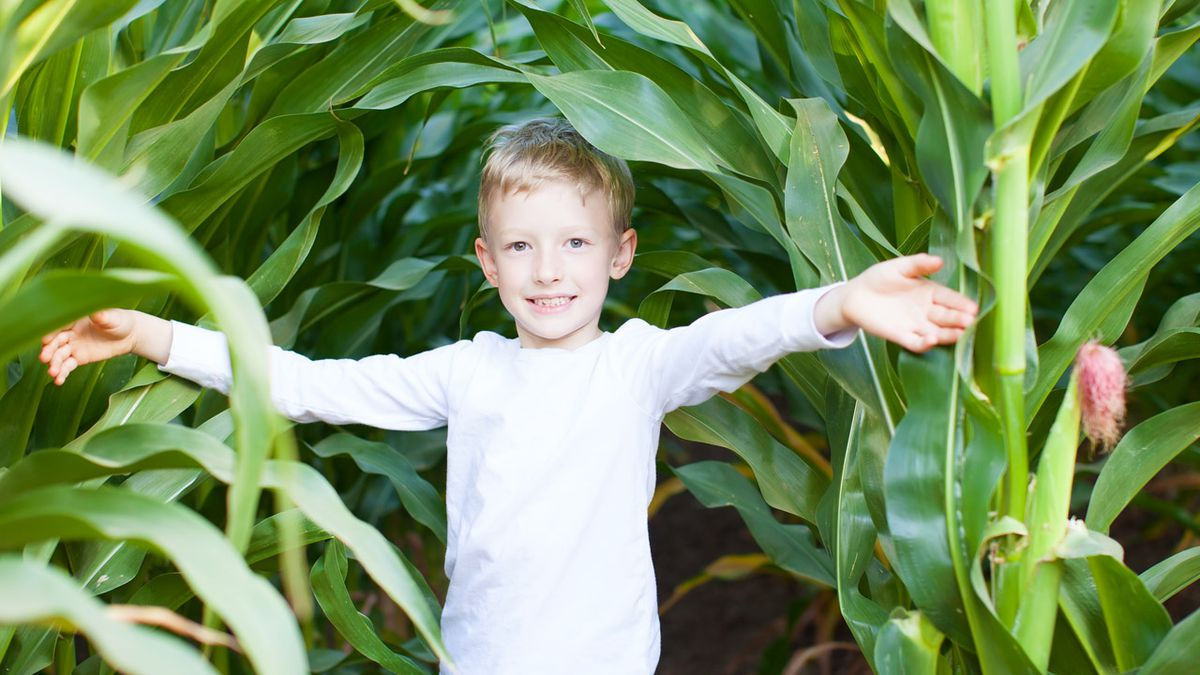 Get lost in fun at Rural Hill corn maze