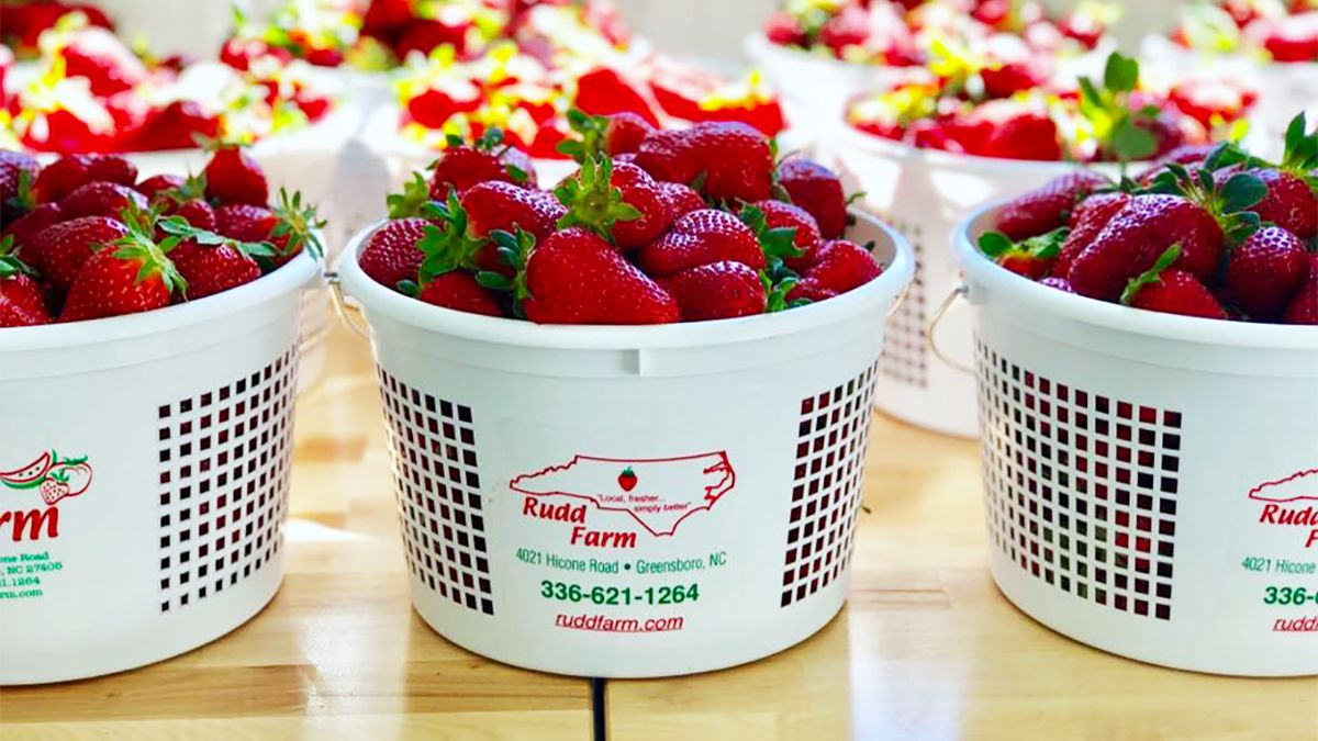 Nc Pick Your Own Strawberry Farm Closes After 8 Workers Test Positive For Covid 19