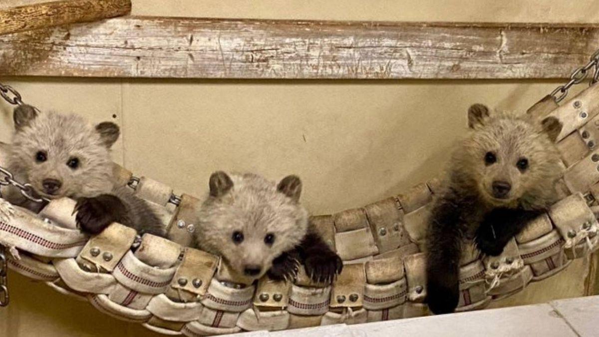 Bearizona Wildlife Park adopts 3 orphaned bear cubs