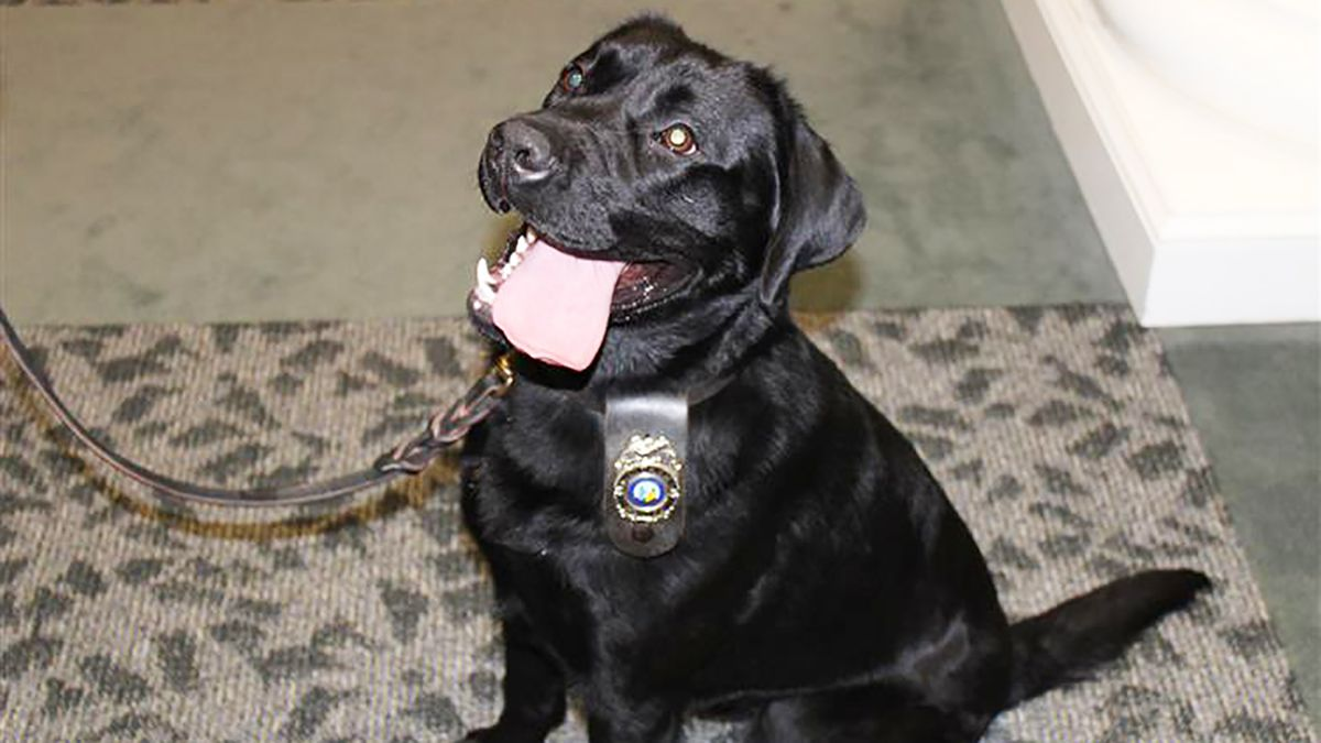 Matthews PD's newest K-9 helps make 2 drug busts during first week on job