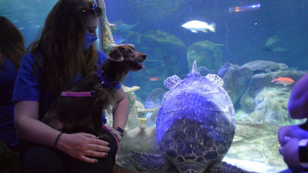 Local shelter pups visit Sea Life Aquarium