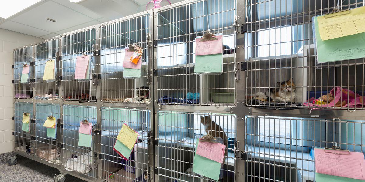 'World's Worst Cat' still looks for home