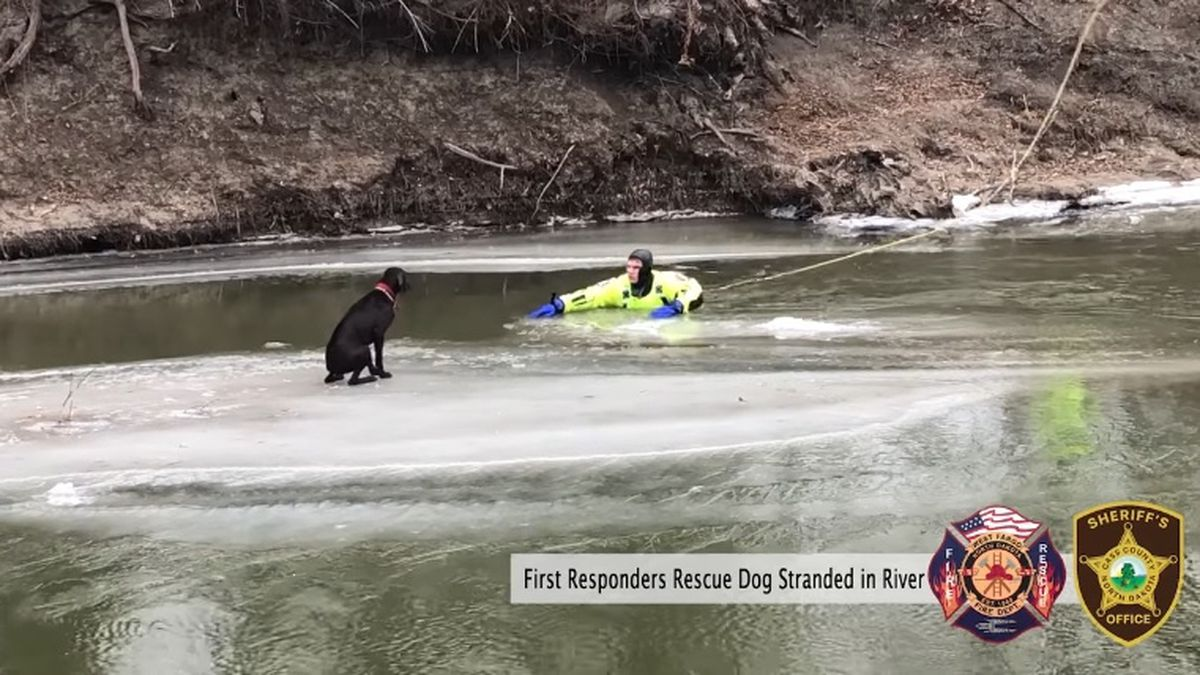 First responders rescue dog stranded on chunk of ice on North Dakota river