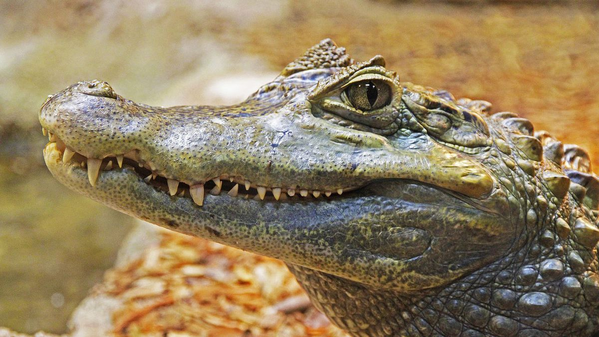 Woman attacked by alligator while walking dog in Hilton Head