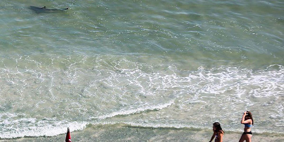 Myrtle Beach tourist snaps photos of sharks lurking feet from beachgoers